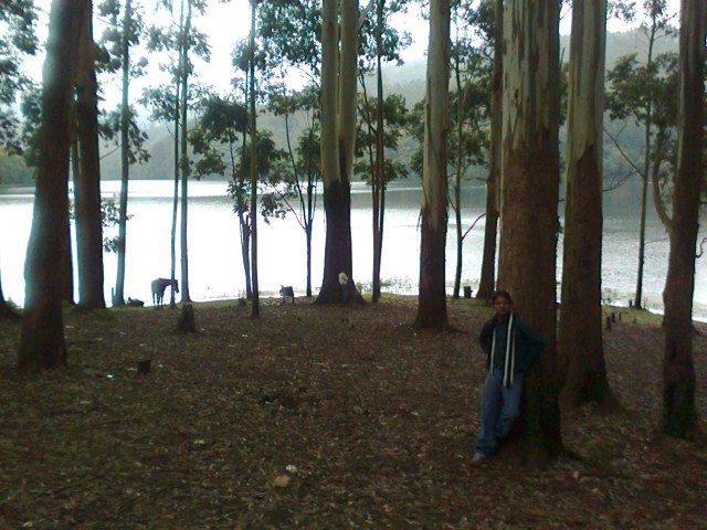 झील की सुंदरता को बढ़ाती वृक्षावली