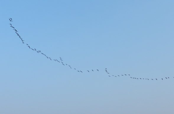 Birds in formation