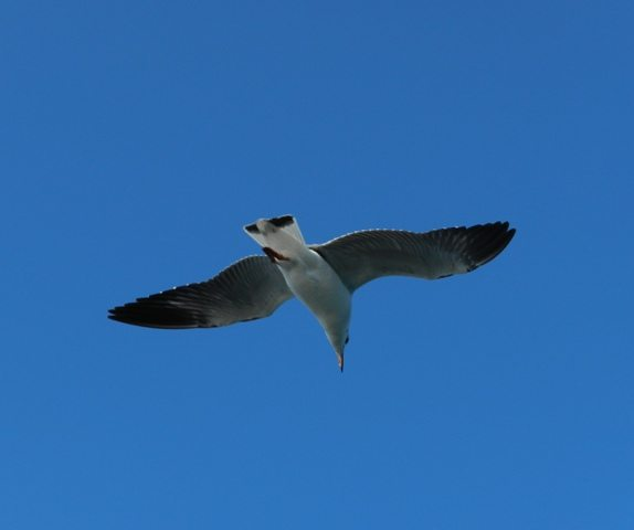 Hovering overhead