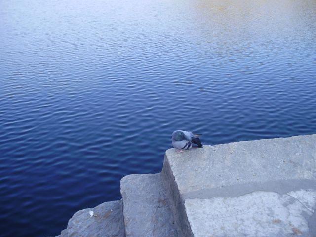 Rajsamand Lake - Rajasthan