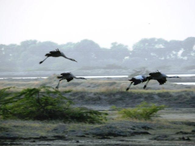 Superb Landing of Storks
