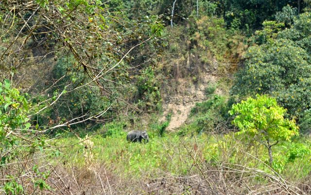 Baby Elephant in the middle of a Bush