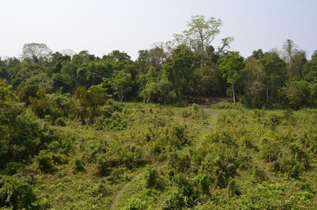 The bare grazing field