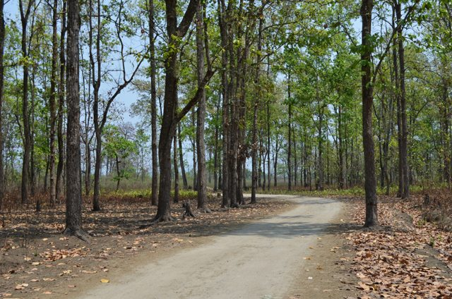 Road through the forest to Nameri National Park