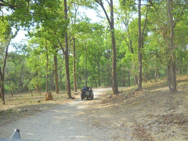 On the way to Bijrani(Jim Corbett Park)