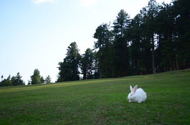 The Cute Rabbit at Baisaran