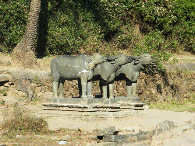 Legendry Bulls