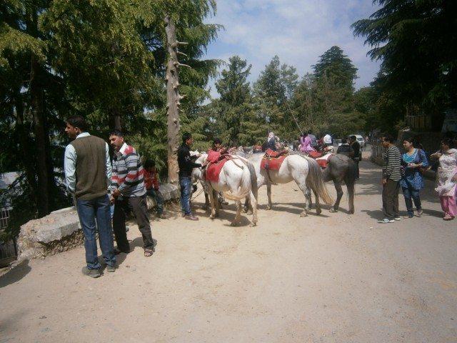 कुफ़री में घोड़े