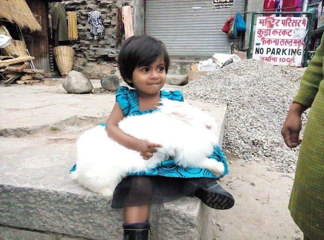 Kiddo with Angora rabit at Vashisht Temple