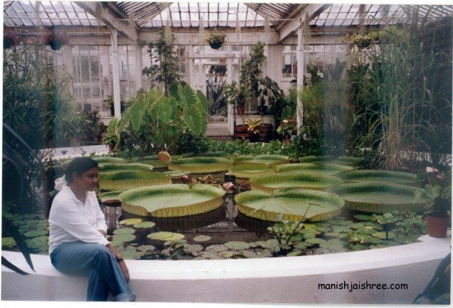 Amazon Lily pond, Botanical Garden, Dublin, 2003