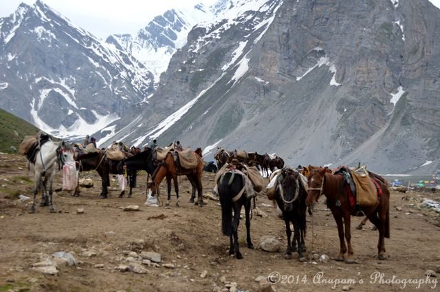 Our horses with their companion! Difficult to find ours