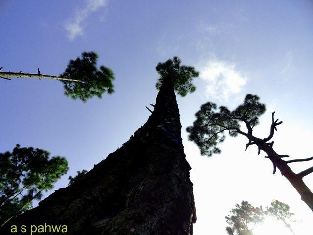 सुबह की पहली किरण के साथ ही विशालकाय वृक्ष भी अपने ऊर्जा के स्रोत की तरफ अपने सिर को उठा देते हैं
