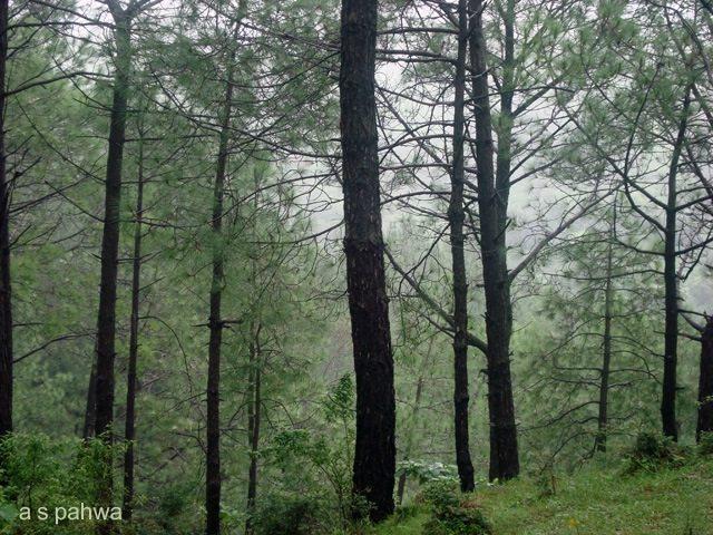 ऊंचे पर्वत हों या दूर तक फैले जंगल, आज केवल सब हरा ही है