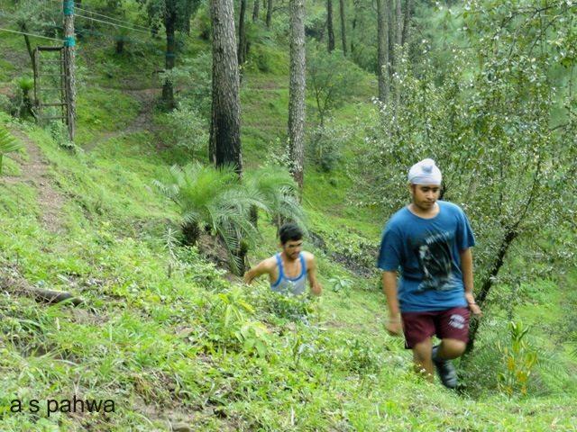 कैम्प क्षेत्र में ही इतना जंगल है कि घुमते रहो