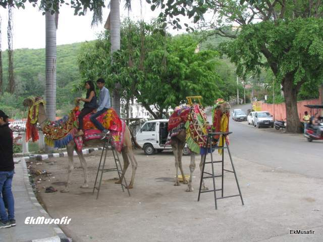 Camel rides near Dudh Talai.