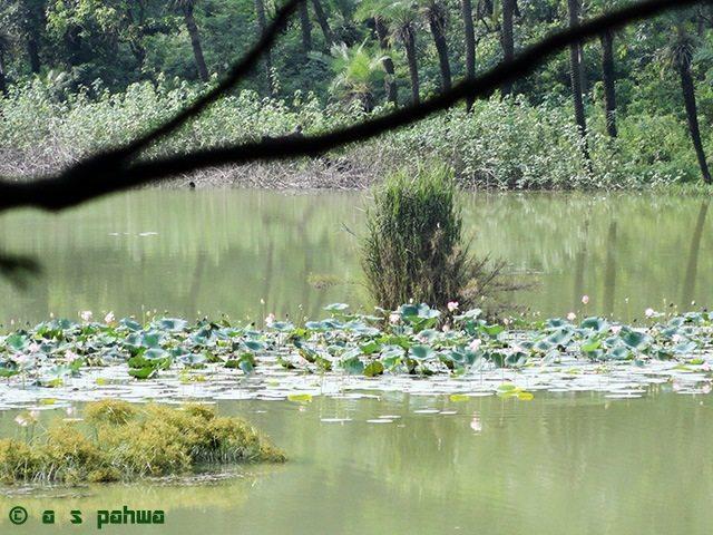 यहाँ-तहाँ खिले कमल दल झील की सतह को एकरस होने से बचाते हैं