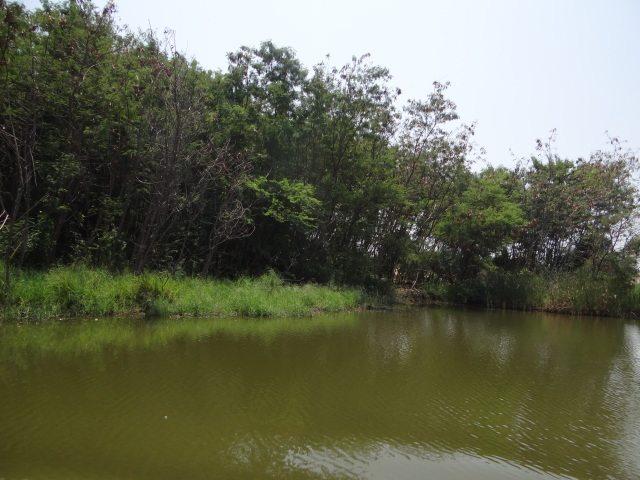 A man made swamp at HB