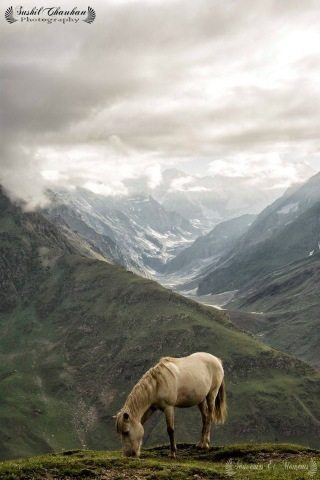 Horse-Grazing-At-Rohtang-Pass