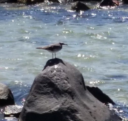 The pleasure of watching birds on Jeddah shore