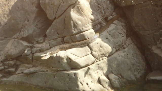 A snake on the marble walls