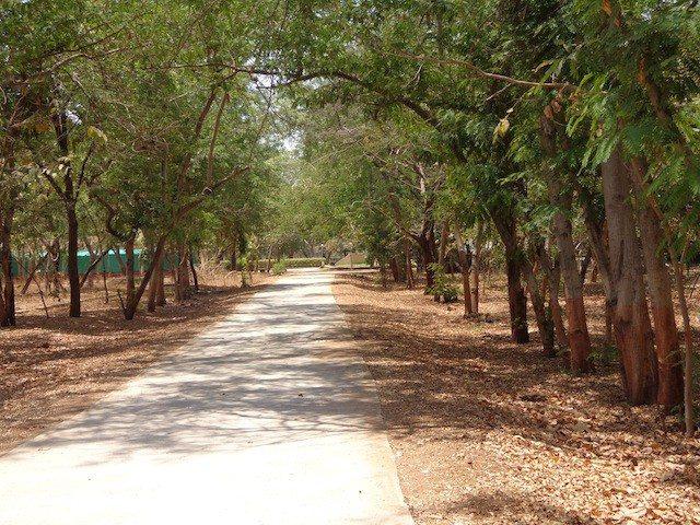 पार्क के अन्दर का रास्ता
