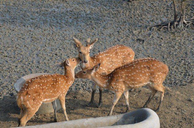 Group of Deer Inside Bonnie Camp