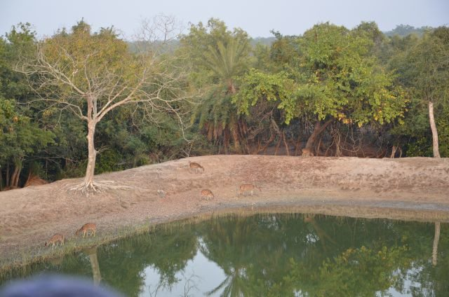 Pond for Deers