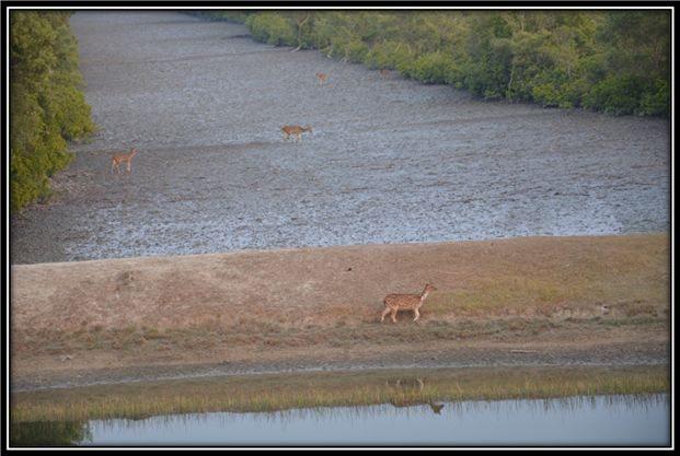 Pond for Wildlife