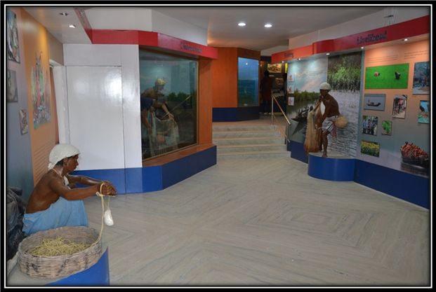 Sajnekhali Museum