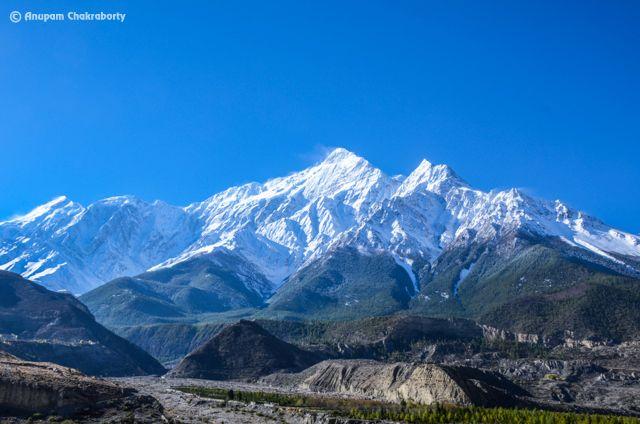 Mountain Nilgiri