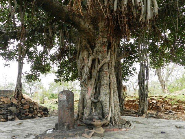 Age old Banyan & Lingam