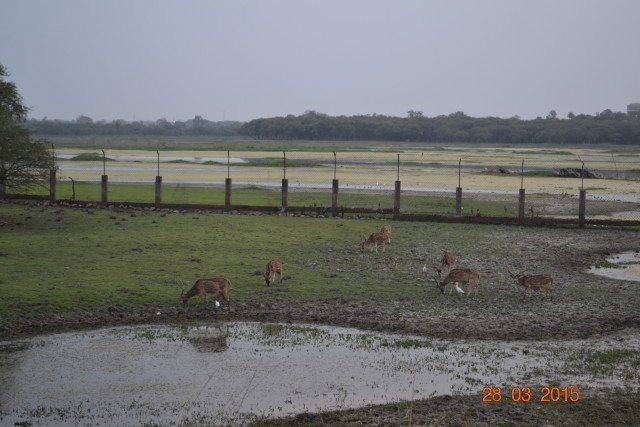 Deer in Van Vihar
