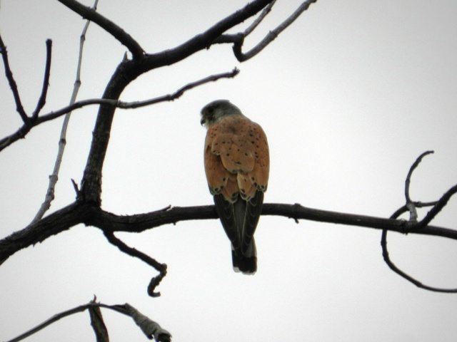 Eagle - A special specie