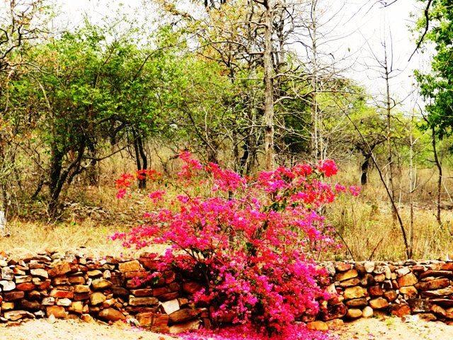 Flora at Panna Tiger Reserve