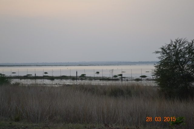 View of Lake from Van Vihar