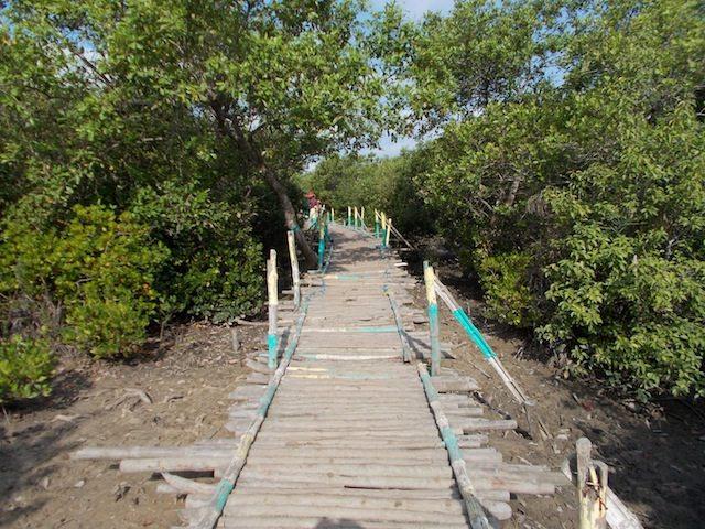 मैन्ग्रोव के बीच बांस-लकड़ी से बना छोटा पुल