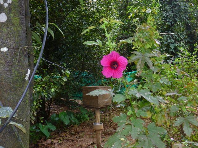 Beautiful Wild Flower