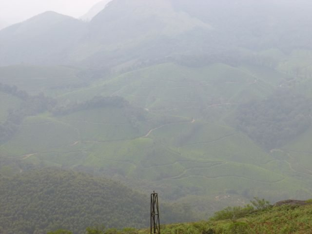 Morning Mist in Munnar