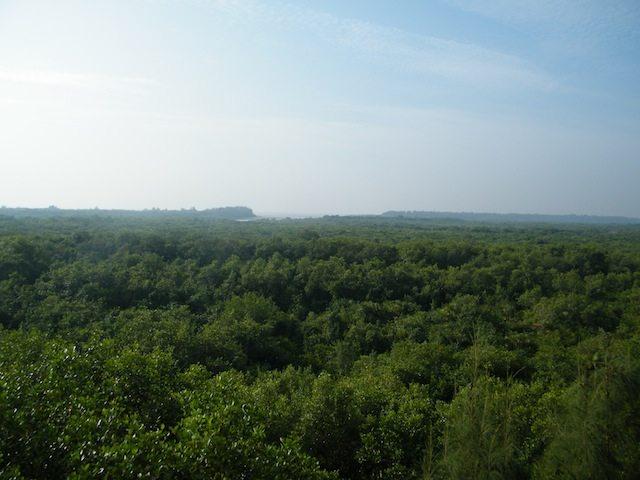 वाच टावर के ऊपर से सुंदरवन का मनोरम दृश्य