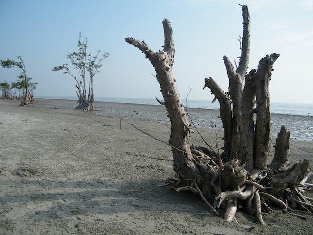 हेनरी आइलैंड का निर्जन समुद्र तट