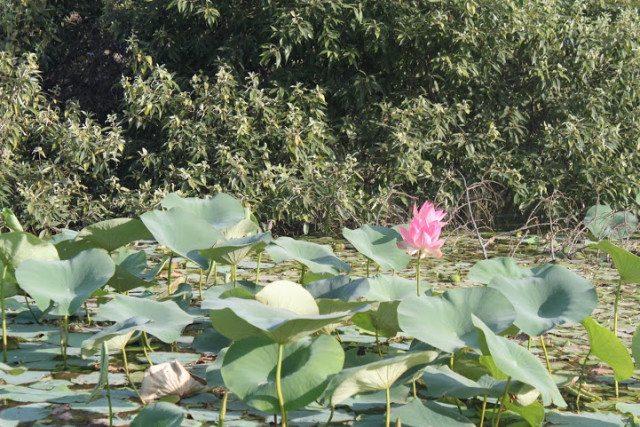 Kamal taal - next to the main lake