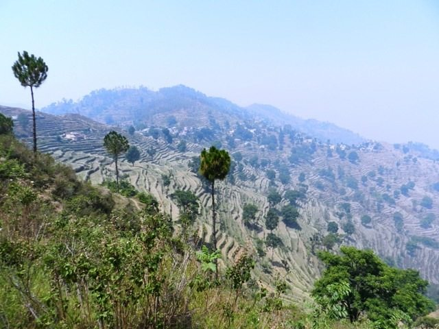 Step Farms in Pauri