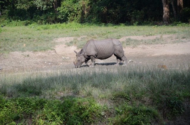 I am the king here : A rhino gazing at Holong