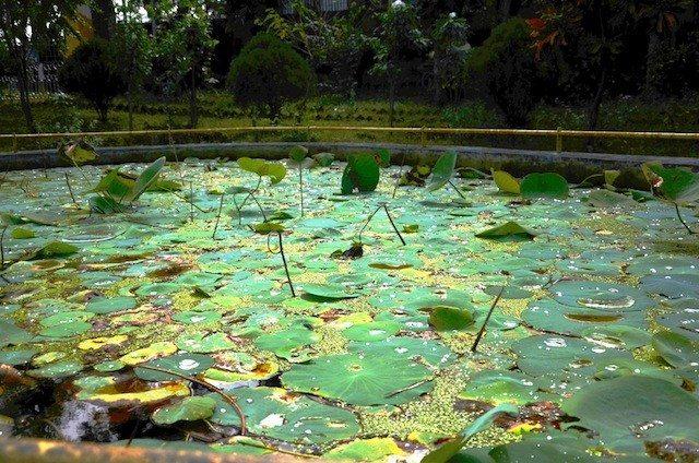 The lotus pond inside the Amaravati Park