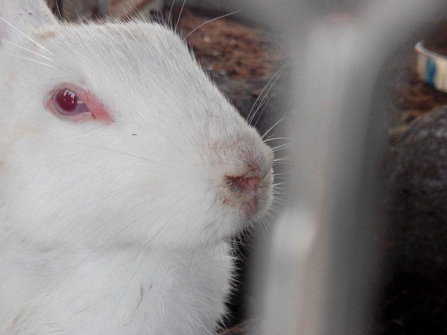 The rabbits' enclosure