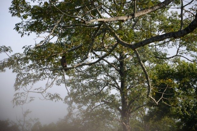An eagle sitting on a tree branch