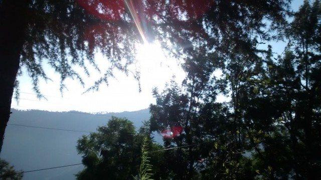 चीड़ के पेड़ों में झिलमिलाता सूरज