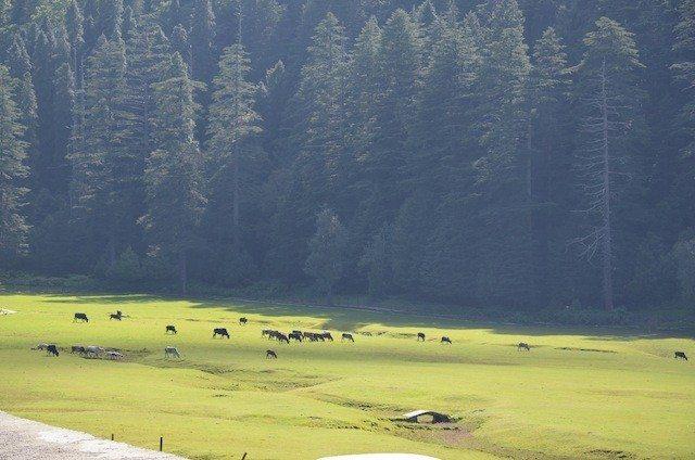 Another view of Khajjiar