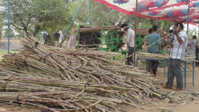 Free distribution of Sugar Cane juice