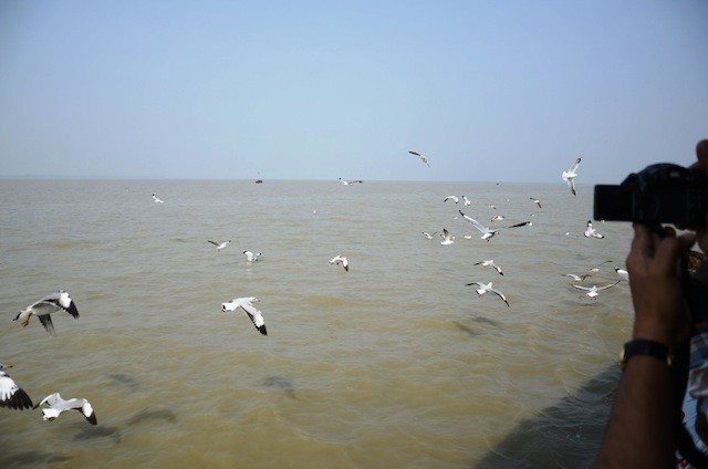 Seaguls continued to travel with us giving much pleasure to the pilgrims
